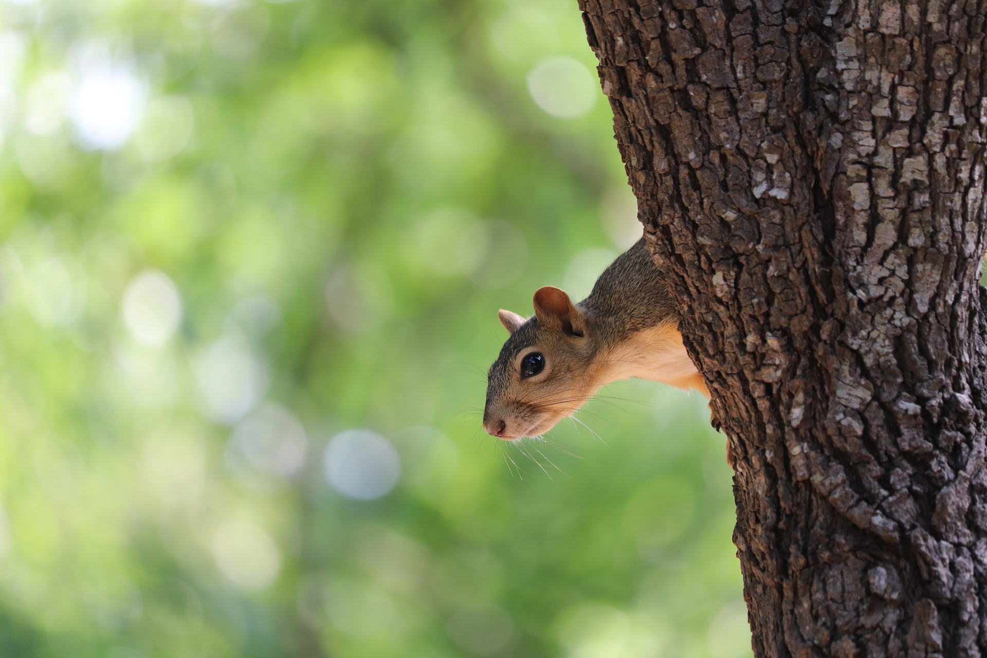 squirrel-banner